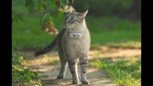 Localizadores para gatos