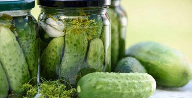 tecnología para conservar alimentos